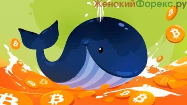 kity-na-rynke-kriptovalyut